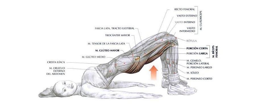 Fisioterapia y diafragma pélvico