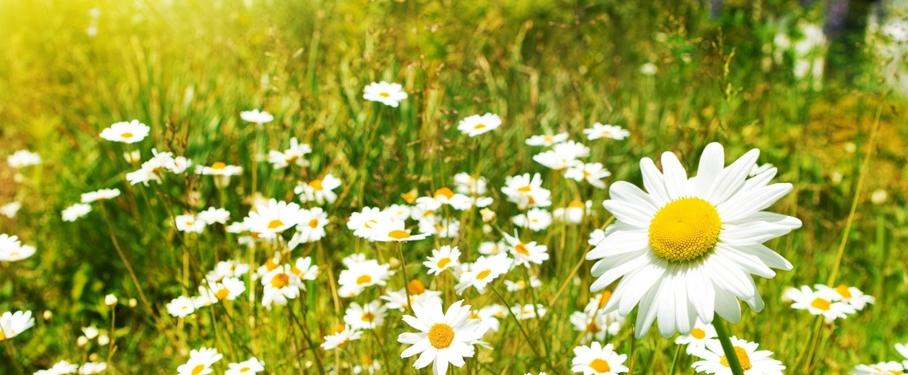 Hábitos saludables en primavera